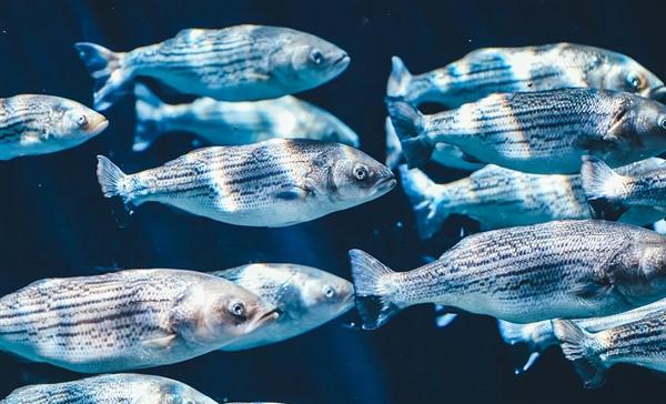 瑞典监听水下神秘信号15年 专家揭秘:是鲱鱼在放屁