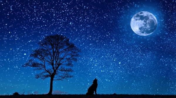 月球好忙 蓝色起源2024年要将首位女性送上月球表面-风君子博客