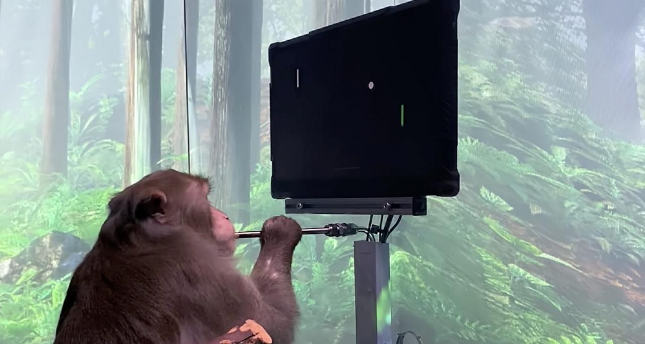 2002年就有人让猴子用意念玩游戏,但马斯克做的事依然很重要