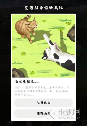 荒漠猫可以和家猫一起玩要不要阻止