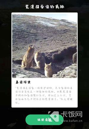 荒漠猫可以和家猫一起玩要不要阻止-冯金伟博客