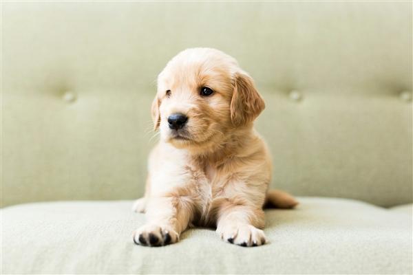 中通快递苏州中转站出现宠物盲盒:大量宠物幼崽不幸离世