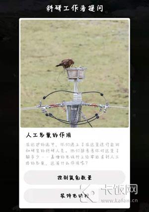 人工鸟巢的作用是什么