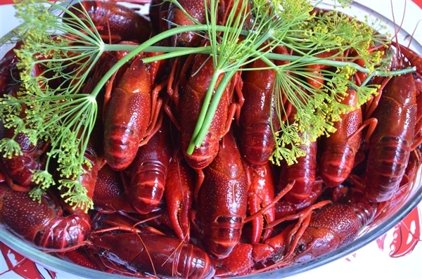 建议加强小龙虾等入侵物种生态防控引关注:禁渔期内易泛滥