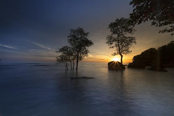 广西北海红树林大片消失 专家称太罕见:修复要6到10年