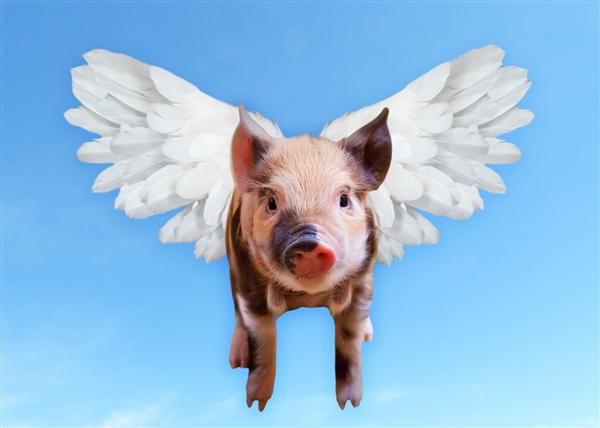 你吃肉自由了吗?猪肉价格跌破每斤15元:19个月来新低