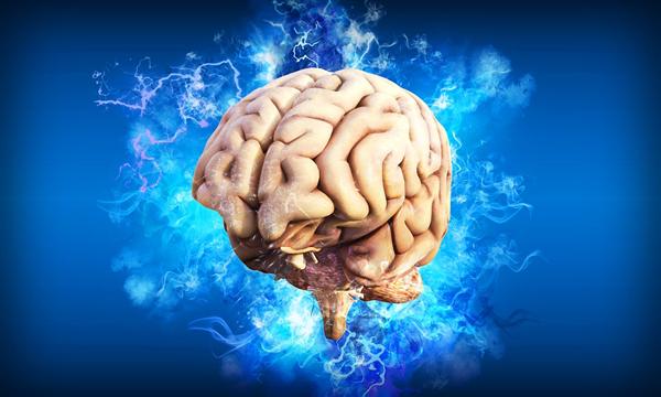 男人靠下半身思考有据可依?研究发现大脑与睾丸十分相似