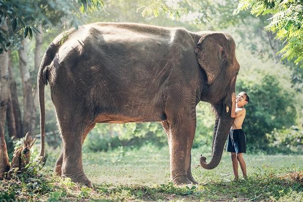 专家解读野象群为何会跑到老百姓家里:想跟人玩
