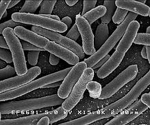 将手机细菌培养72小时:我一把给扔了