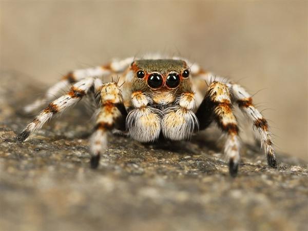 被一只蜘蛛八只眼睛盯上 想想就很可怕
