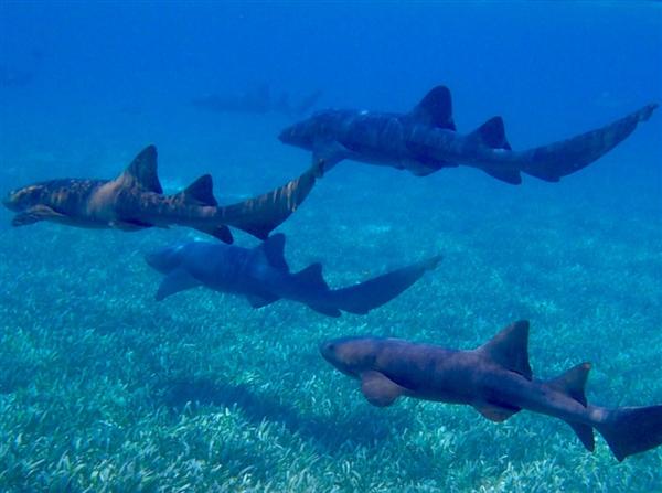 3米长鲨鱼排便过猛致脱肛 网友:隔着马赛克都觉得痛