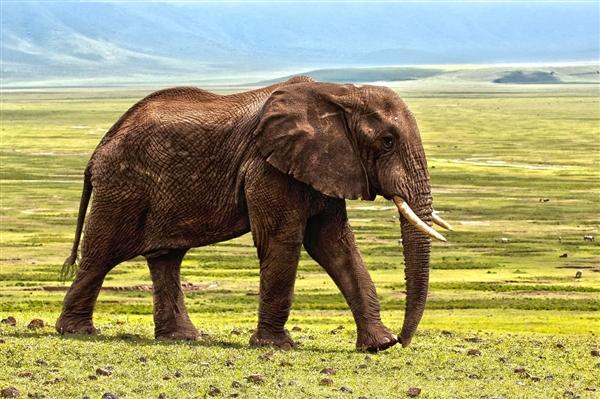 成精了!印度大象操作压水井喝水:出水后开心扇耳朵