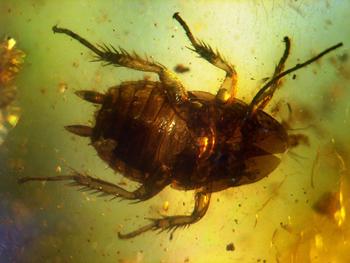 人到底能有多害怕蟑螂?-冯金伟博客园