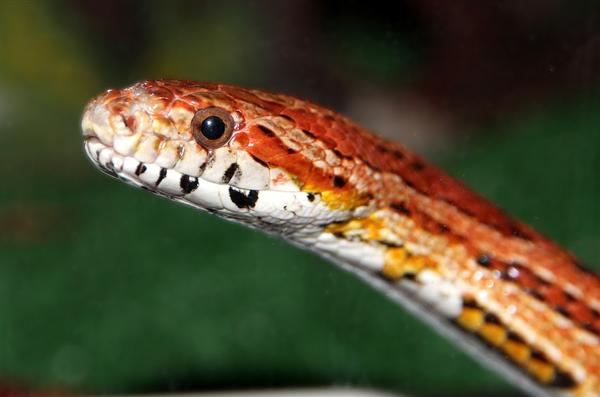 女子与蛇同居15年 蛇子蛇孙每年来投靠下蛋