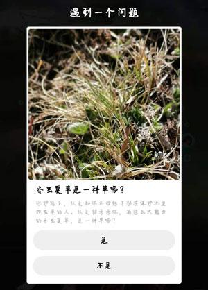 冬虫夏草是一种草吗