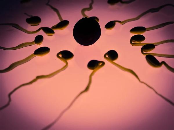 首个!科学家发现三种不同性别集一身的藻类物种