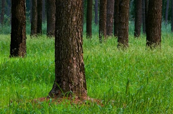 """""""地球之肺""""遭遇危机!亚马孙雨林逾万种动植物面临灭绝"""