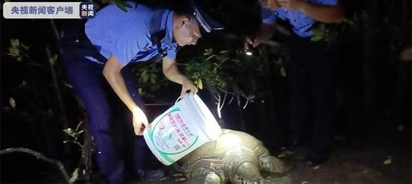 三亚红树林发现200斤患病巨龟:身体虚弱无法爬行、还留着眼泪