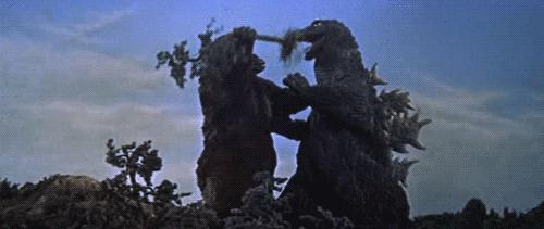 """日本变异双头龟引发关注 以后会不会还有什么""""怪物""""出现?"""