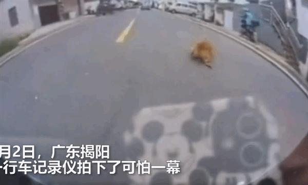 狗子乱闯马路被汽车撞飞 怒咬无辜外卖员!网友:求如何判