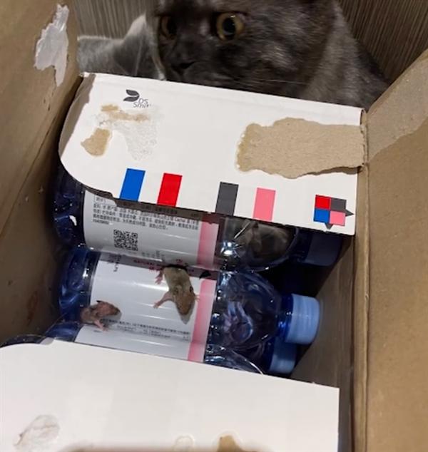 天猫超市就矿泉水现老鼠事件道歉:下架相关商品 全面排查